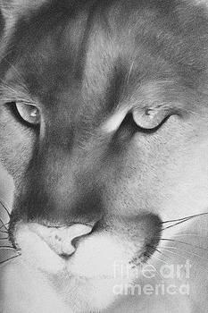 Cougar by Adrian Pickett