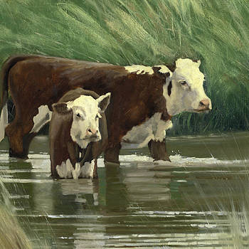 Cows in the Pond by John Reynolds