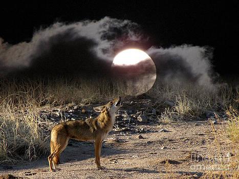 Coyote Moon by Rick Wheeler