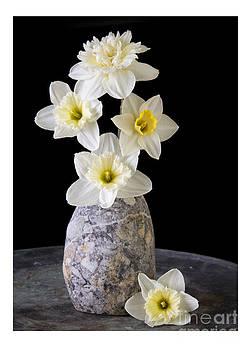 Edward Fielding - Daffodils