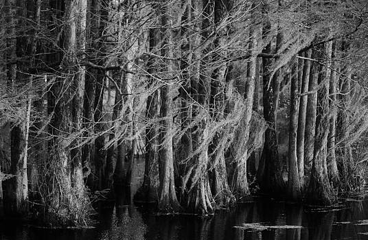 Paulette Thomas - Dancing Trees in the Swamp
