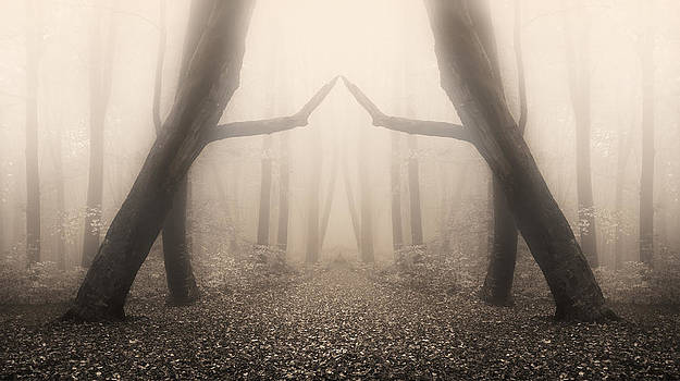 Dark dreams by Toma Bonciu