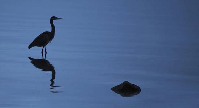Dark Heron by Timothy Hack