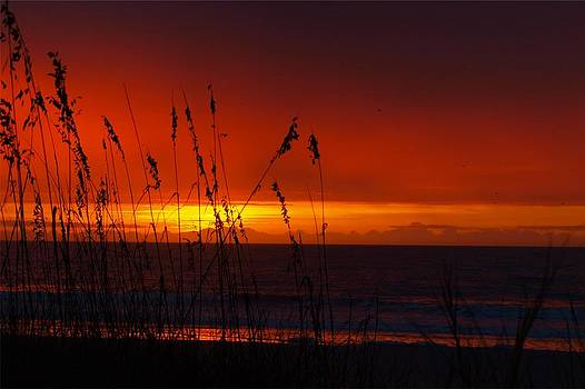 Dawn's Early Light by Kathleen Palermo