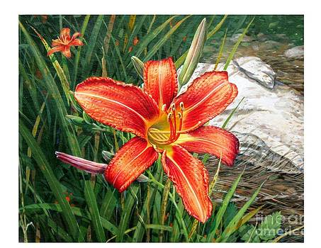 Day Lily by Bob  George