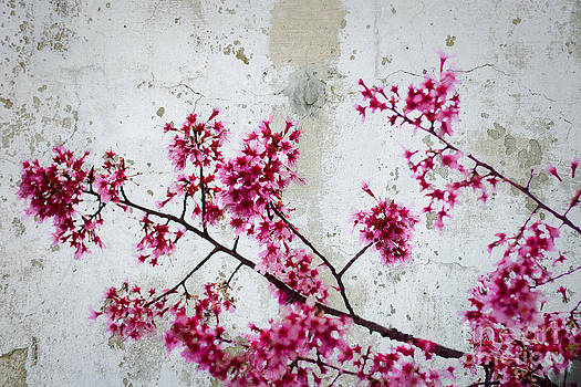 Beverly Claire Kaiya - Deep Pink Flowers with Grey Concrete Texture Background