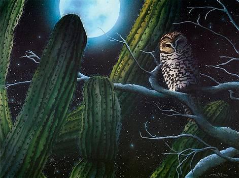 Desert Night by Mark Hicks