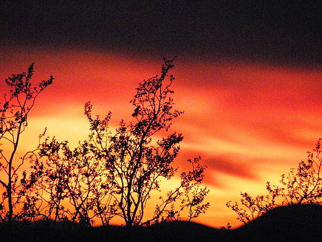 Desert Sunset by Claire Plowman