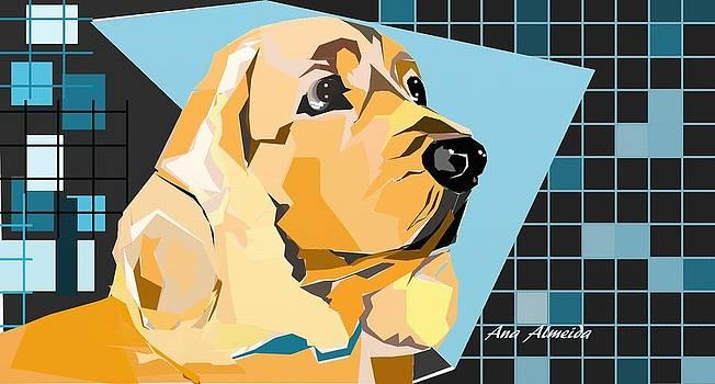 Dog by Ana Almeida