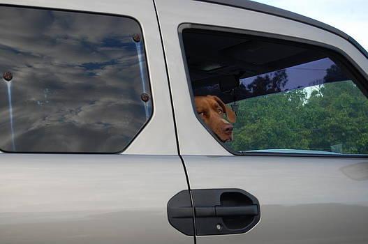 Dog in car #1 by Richard Ballo