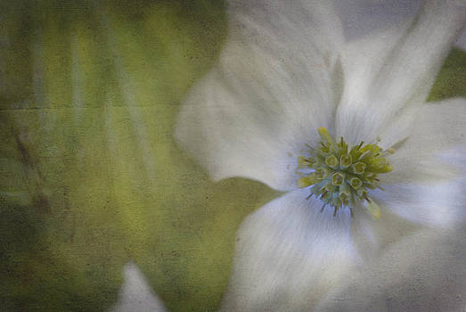 Dogwood by Cindy Rubin
