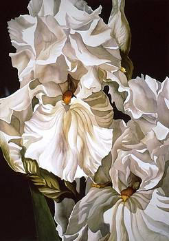 Alfred Ng - double white iris