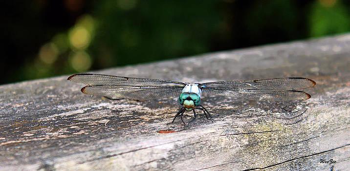 Dragonfly by Carolyn Ricks