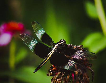 Dragonfly by Debra Crank