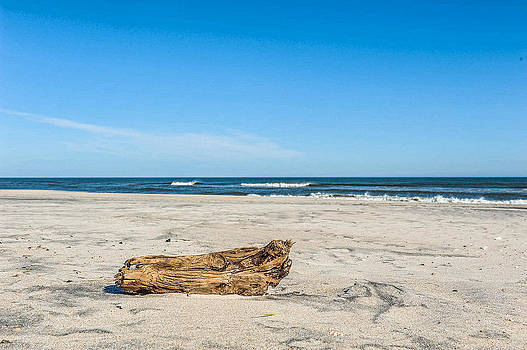 Driftwood by Kelley Nelson