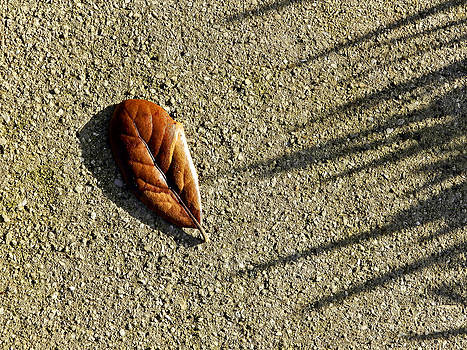 Stuart Brown - Dry leaf on concrete # 1