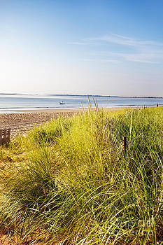 Jo Ann Snover - Dune grass escapes the fence