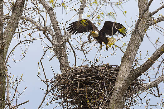 Jack R Perry - Eagle Nest