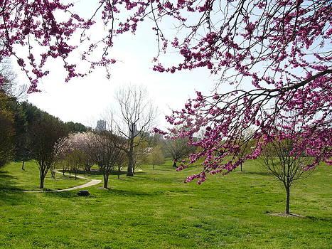 Early Spring in Winston Salem by Deborah Willard