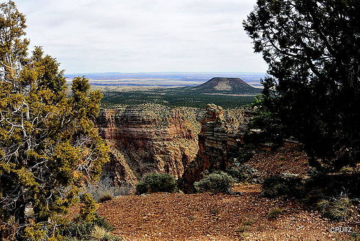 East Rim View by Carrie Putz