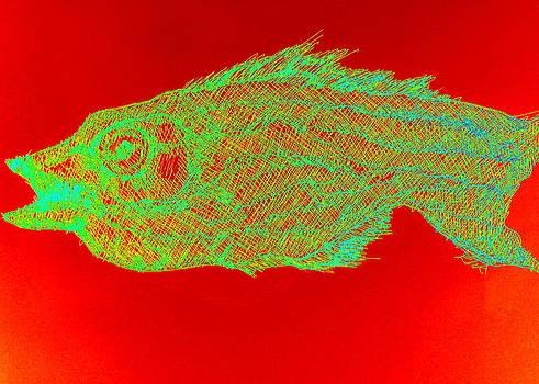 Electric Fish by Johanna Elik