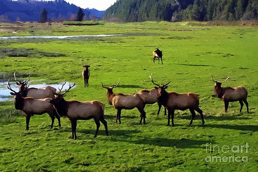 Elk or Wapiti by Larry Stolle