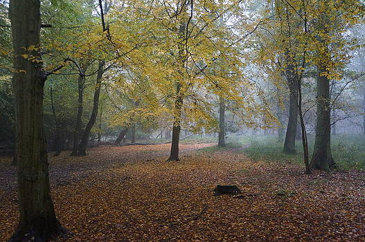 Epping 8 by David  Hawkins
