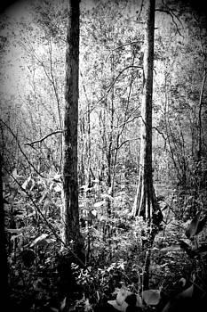 Everglades by Jose Mena