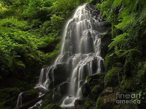 Tim Moore - Fairy Falls