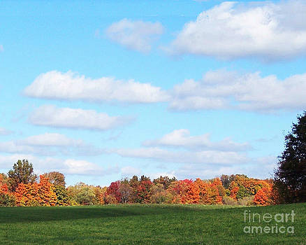 Fall Colors III by Robert  Suggs