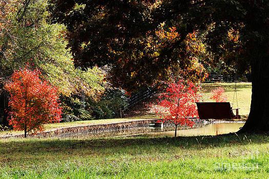 Fall Colors by Jinx Farmer
