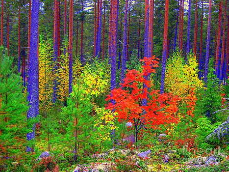 Fall colors by Pauli Hyvonen