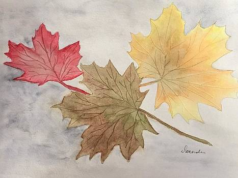 Fall leaves by Daisy Morales