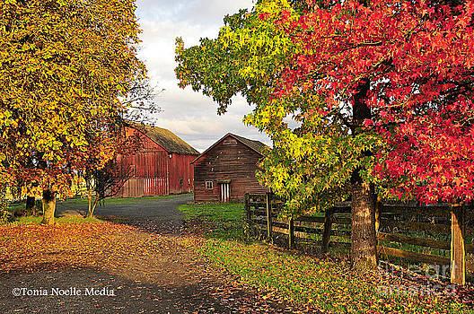 Fall on a Farm in Oregon by Tonia Noelle
