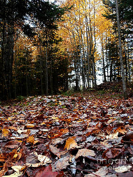Fallen leaves by Steven Valkenberg