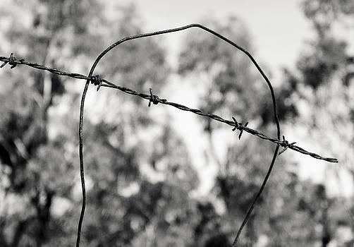 Steven Ralser - fence