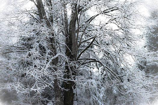 Ronda Broatch - First Snow