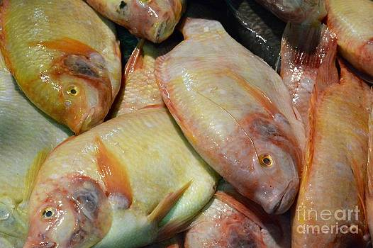 Fish by Bobby Mandal