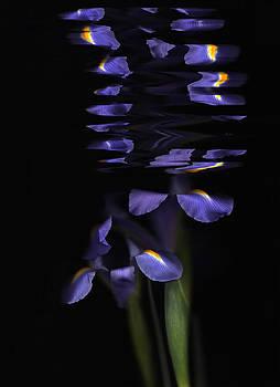 Susan Leake - Flag Iris after the rain