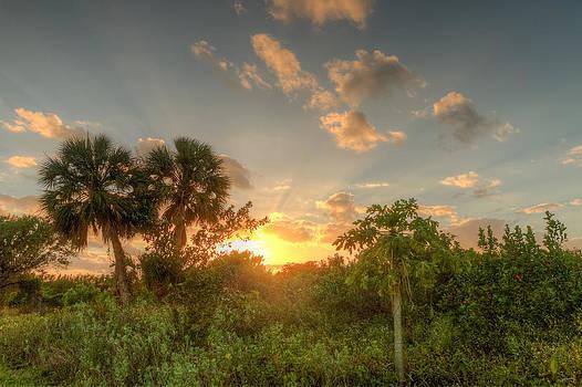Flamingo Sunset by Doug McPherson