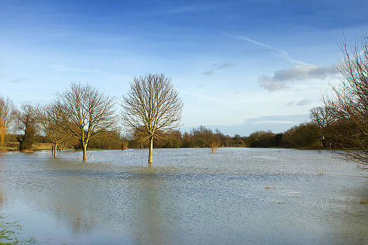 Fizzy Image - flooded field in rural essex