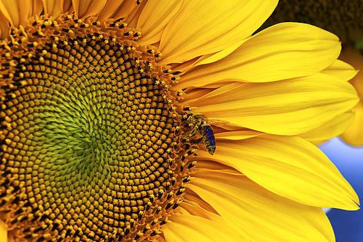 Flower bee by Martin Hristov