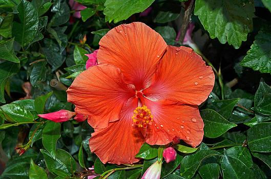 Flower Garden 2 by Making Memories Photography LLC