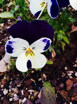 Flower by Niki Mastromonaco