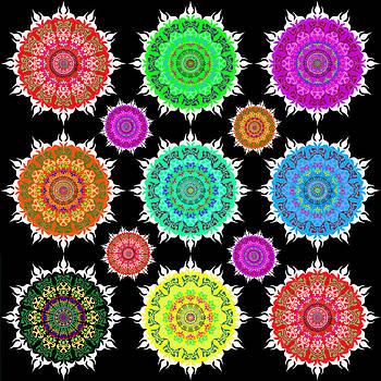 Flowers by Moshfegh Rakhsha