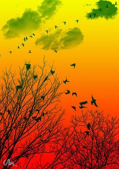 Fly by Armin Shohrati