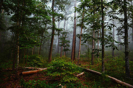 Foggy Forest by Jeff Rose