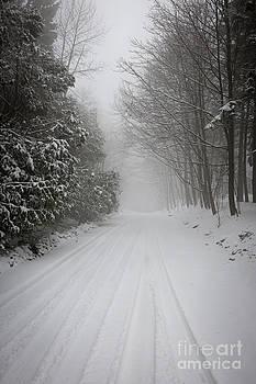 Elena Elisseeva - Foggy winter road