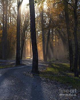 Larry Braun - Forest Glow