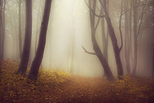 Forest of my dreams by Toma Bonciu